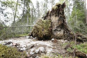 Skogsstyrelsen ansvarar för många av de biotopskydd som finns och Länsstyrelsen för drygt 90 av de drygt 100 naturreservat som finns i kommunen.