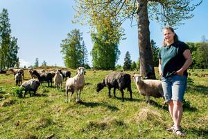Fåren på Alnö småbruk används för bete och för ullens skull. Trädgårdsull är effektivt som täckmaterial i trädgården. Sofia Engberg tovar och håller även på att lära sig spinna. Målet är att ta tillvara på allting.