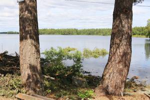 Här har man dragit in träden över vattnet.