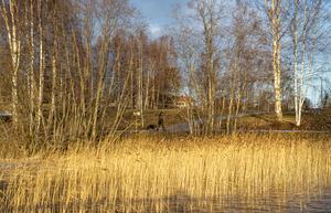 I år får det bli promenader runt sjön.