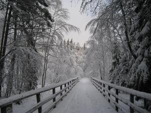 En vintrig vandring anordnas i Tyresta söndagen den 19 januari mellan klockan 11.00-14.00. Foto: Tyresta nationalpark