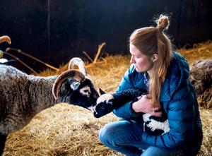 Ett gutefår kollar upp vad Amanda Alskog gör med hennes lamm.