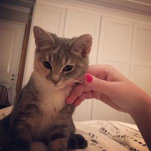 57) Jag var kattvakt under två veckor åt min systers katt Selma och jag blev helt och hållet förälskad i den lilla lurvbollen! Jag behövde så mycket kärlek just då och är det nåt katter kan så är det att ge kärlek!❤️ Foto: Katrin Franck