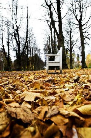 bli jord. Löven som samlas ihop komposteras och blir till jord som kommunen sedan använder när de planterar träd.