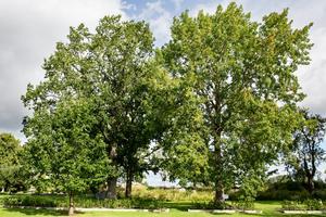 Stina och Pelle vårdar inte bara trädgårdsväxter utan också de stora lövträd som finns på tomten.