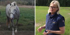 Madeleine Bergvall på Esperuds gård var chockad flera dagar efter händelsen. Bildmontage: Peter Eriksson