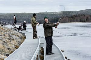 I fjol så var det premiär för fisket från stenpiren och sportfiskarna gillar fisket i älven för när årets fiskekort släpptes så blev det hysteri.