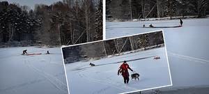 Dramatik med lyckligt slut när en hund och älgko hamnade i det iskalla vattnet vid Granvågsniporna utanför Sollefteå under söndagen. Foto: Räddningstjänsten