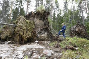 Bertram Schmiterlöw, ordförande LRF kommungrupp Norrtälje, tycker att det är dags för skogsägare att höja rösten. – Varför ska Skogsstyrelsen och Länsstyrelsen slippa ta bort stormskadad skog när enskilda skogsägare måste göra det innan den 1 juli? säger han.