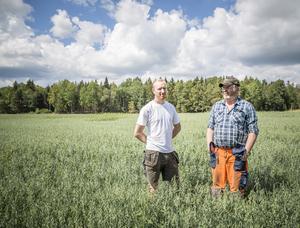 – Det blir ett ekonomiskt jobbigt år, säger Oscar Andersson (till vänster) om hur torkan påverkar lantbrukare som honom och Håkan Fallgren. De vädjar till konsumenterna att köpa svenska livsmedel.
