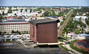 Holken på Lantmännens silo i Västerås där det i år föddes tre nya falkungar.