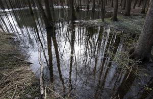 Vi behöver öka möjligheten att undanta viktiga skogsområden från industriellt skogsbruk, så att det finns förutsättningar för fler arter att överleva. Det kan vi göra genom att bilda naturreservat, skriver debattförfattarna.