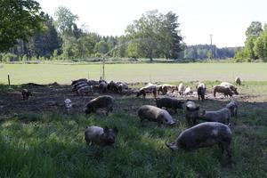 Antalet öppna gårdar under Fest i Heby är få, något som festivalgeneralen menar beror på att veckan ligger under en tid då annat måste göras på gårdarna.