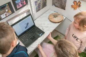 En liten myra på ett pappersark hamnar under luppen och dyker upp på skärmen i storformat.