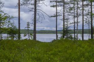 Den lilla hjortronmyren på väg från stugorna mot Lillvallsssjön.
