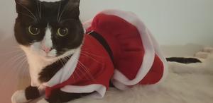 2) Snäckan 4 år i sin jul klänning.  Foto: Linda Lyckholm