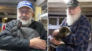 Kaniner har länge varit Göran och Johny Stolpes stora hobby.