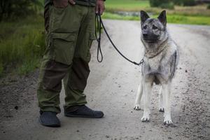 När björnen attackerade husse Kristoffer kom gråhunden Birk till undsättning.