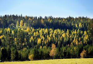 Den svenska skogen tar upp mer koldioxid än den koldioxid som frigörs vid förbränning och avverkning, skriver Kjell Andersson.