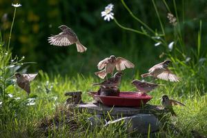 Var egentligen ute efter fjärilar när jag fick syn på dessa som satt så vackert på Vallörten. Bild: Ing-Marie Sjödin