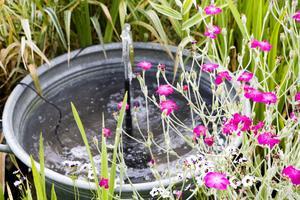 Sommarnejlikans lysande blommor kontrasterar vackert mot vattenblänket.