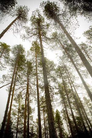 De flesta träden är över 110 år gamla, men 300-åriga träd och enstaka på 500 år finns i reservatet.