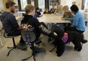 Skolhunden Aramis är med på många lektioner på friskolan i Edsele.