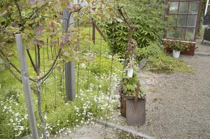 Rost. Det finns mycket rost för att bidra till en ålderdomlig känsla i trädgården.