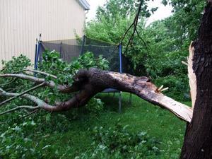 Ett träd blåste ned i en trädgård i Hemlingby när blåsten drog in över Gävle på torsdagen.