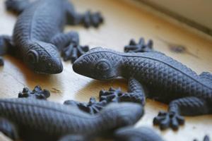 Sällskap i Skrivarlyan. Salamandrar i alla former.