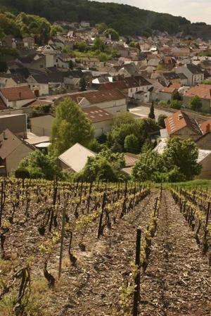 EN champagneby. Verzenay ligger inbäddad bland de sluttande vinodlingarna. Det finns 75 champagneproducenter i den lilla byn.