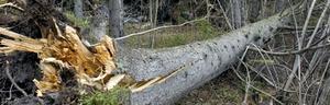 Uppresningen efter stormen Ivar har skördat ett dödsoffer, en 66-årig Härnösandsbo.