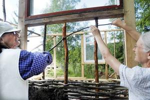 Sylvia Lindheim till vänster och Lorna Hutchings jobbar med fähuset som ska få flätade väggar av sly.