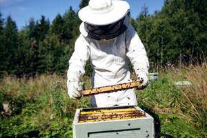 Många bin är det, men alla bidrar på sitt sätt till produktionen av honung, men också till den för oss människor livsviktiga pollineringen.