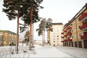 De sju omstridda tallarna på Abraham Bäckgatan.