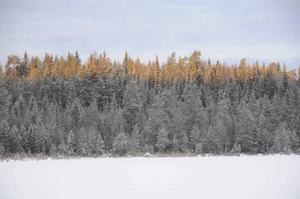 Här kommer en bild när de första solstrålarna träffa skogen vid sjön Axen.
