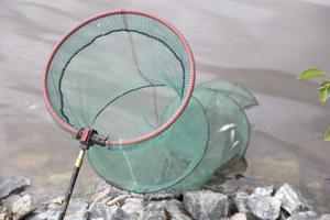 Här hamnar fiskarna efter fångsten, och om det går väl kan de simma ut i friheten igen.