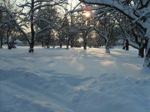 Solens strålar får snön att gnistra och skimra.Tittar man lite närmare ser man regnbågens alla färger i snökristallerna.