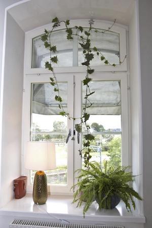 Krukväxterna trivs i de höga ljusa fönstren.
