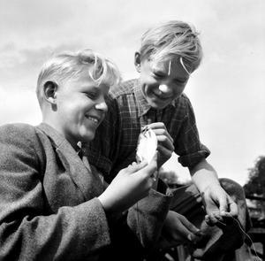 Lyckliga grabbar på fiskafänge. Bilden är tagen någon gång på 50-talet.