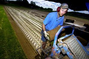 Gräsmatteupptagning. Både snabbt och rakt skär den amerikanska gräsmatteupptagaren upp gräsmattan i 40 centmeter breda längder som kapas till 2,5 meter långa rullar. På bilden ses gräsmatteodlaren Gustaf Oljans ta emot och kasta undan en rulle för att ge plats åt nästa.