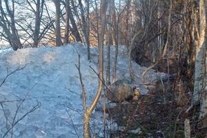Den här typen av issörja korkade igen vattenintaget till Arbogas reningsverk. Foto: Thomas Andersson.