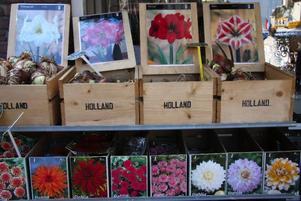 Det är många som köper med sig blomsterlökar och fröpåsar från Holland.