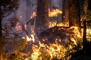 Den långa torkan orsakade många bränder under sommaren 2019. Branden i Brattsjö var den femte största i Sverige.