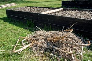 Gamla växtdelar blir jättebra täckmaterial till jorden i pallkragarna.  Det stoppar ogräs och håller jorden fuktig.