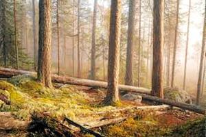 Många skogsägare tror på ökade priser på timmer och massaved, och på skogsfastigheter.
