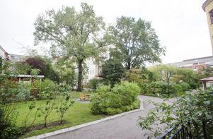 Grön och lummig innergård.