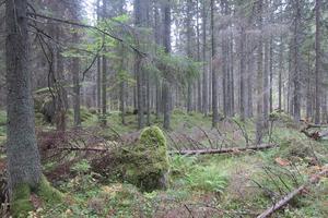 2 Måsjön-Borudamyren, 130,3 hektar (91). (Ligger mellan Älmsta, Skebobruk och Hallstavik) Myr- och skogsområde som har utvidgats. Området är bland annat rikt på speciella svampar. Exempel på skyddsvärda arter: lunglav, brandticka och sävsparv.