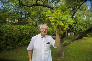 David Freedman i Östertälje är äppelodlare sedan 50 år tillbaka. Han har både sommar-, höst- och vinteräpplen i sin trädgård.