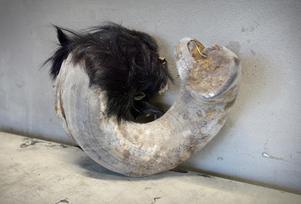 En av de mest ovårdade hovarna man kan hitta på Nordvik. Den finns där som ett avskräckande exempel.